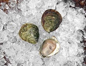 Austern kaufen in Hamburg und Austern essen in Hamburg
