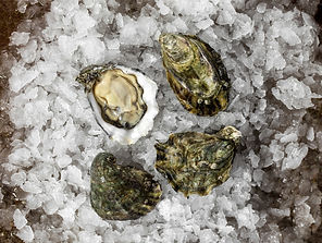 Austern kaufen und Austern essen