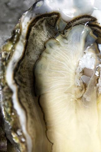 Wilde Austern kaufen in Hamburg und wilde Austern kaufen in Bremen