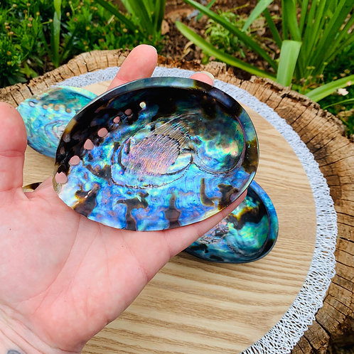 Polished Abalone Shell