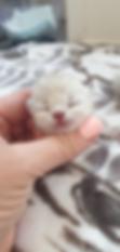 yas kitten 2019.png