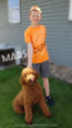 Mars Kinnickinnic Goldendoodles.jpg