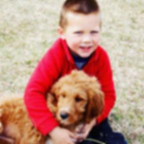 goldendoodle-puppy-retriever-poodle-golden-doodle