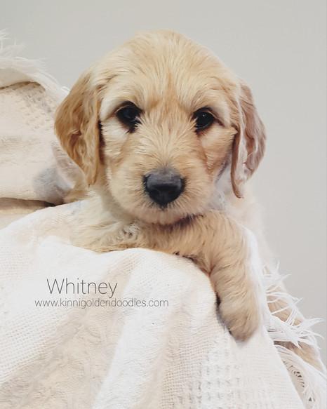 Whitney now Kinzie