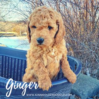 Ginger_edited.png