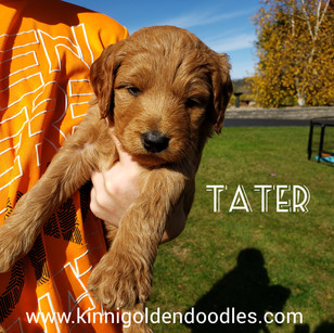 Tater now Charlie