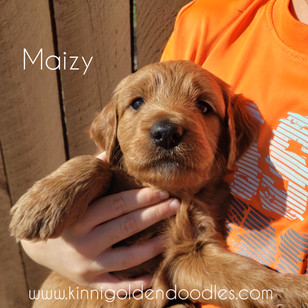 Maizy now Nala