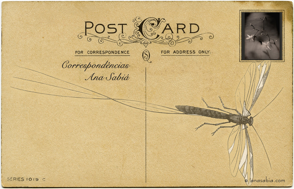 cartao postal