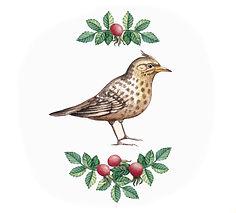 ilustração de um pássaro marrom em meio à plantas e frutas