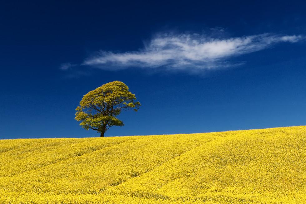 COLOUR - Sole Tree by Jonny Clark (8 marks)