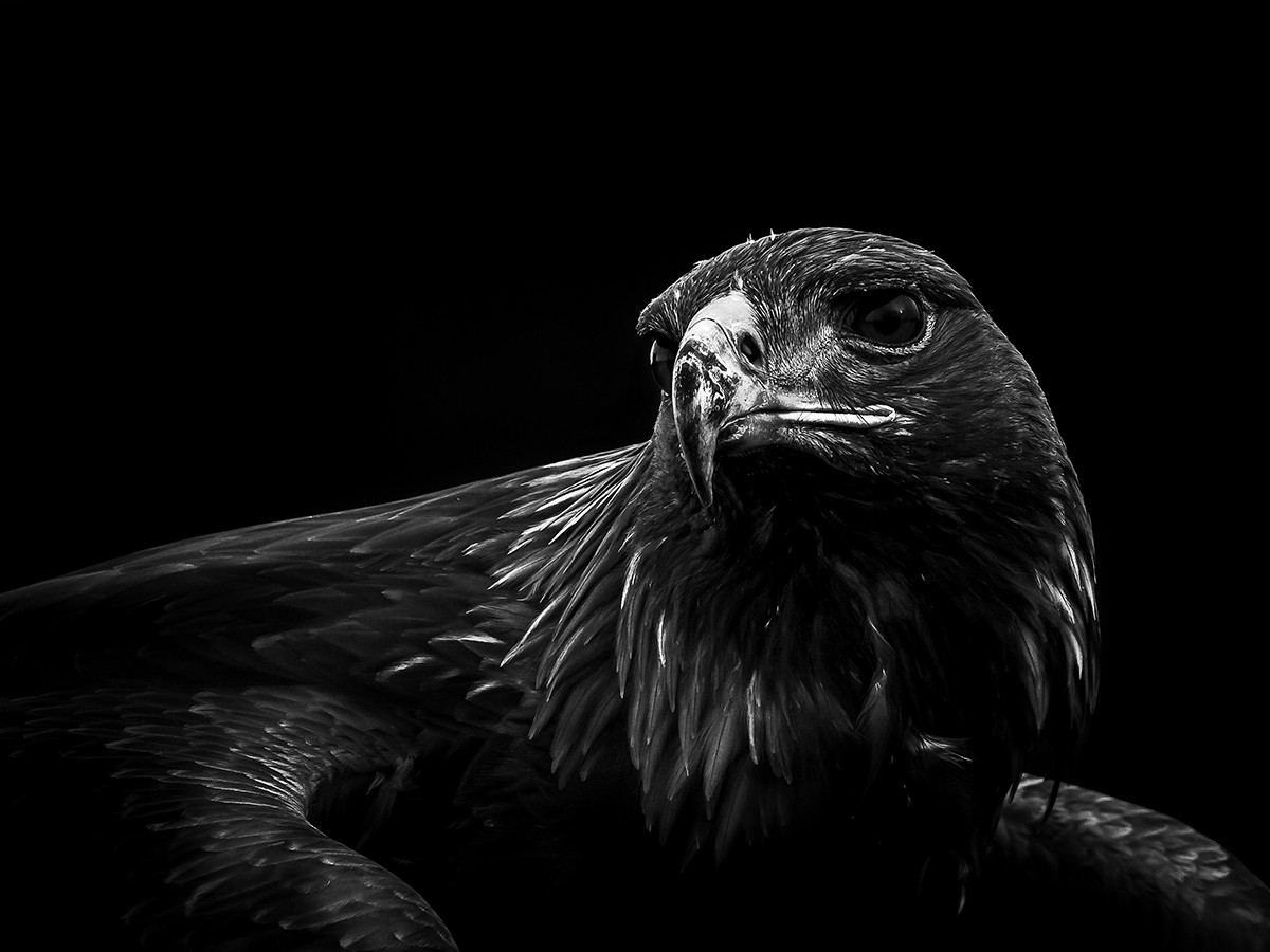 MONO - Watching You by Tom Dalzell (10 marks)