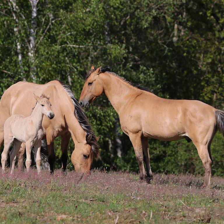 Exkursion - Pferde im Naturschutz (ausgebucht)