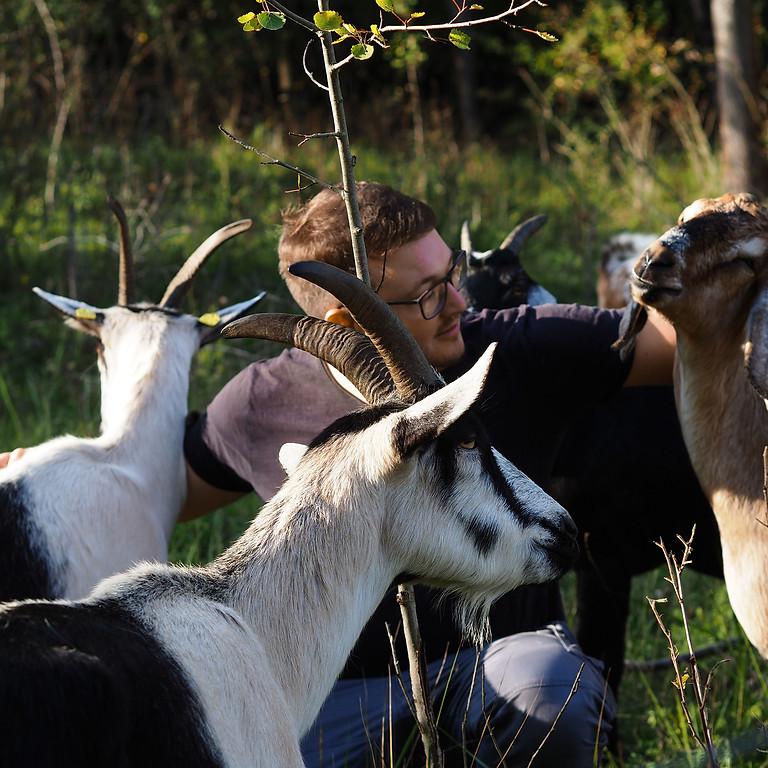 Exkursion: Mit Ziegen durch die abendliche Döberitzer Heide
