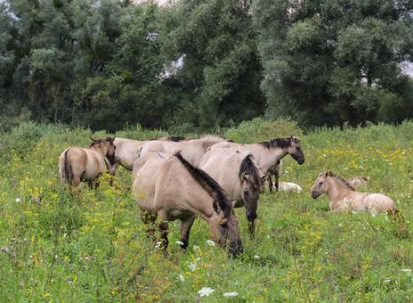Fachexkursion: Es müssen nicht immer wilde Pferde sein…