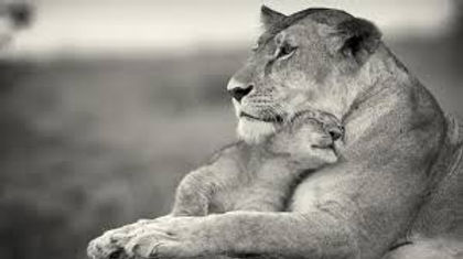 Mother Lion.jpg