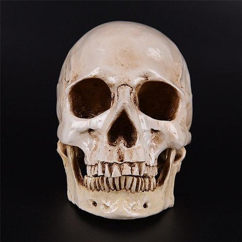 1pc Human Eagle Statue Sculpture Resin Skeleton Head