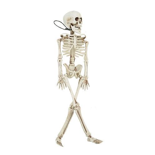 40CM Human Anatomical Anatomy Bone Skeleton