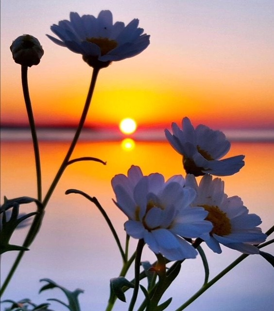 Flowers Sunset