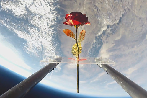 24K Space Rose