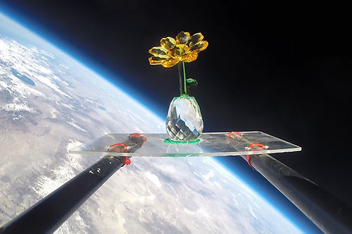 The Stratosphere Sunflower
