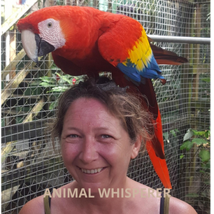 Les Animal whisperer.png