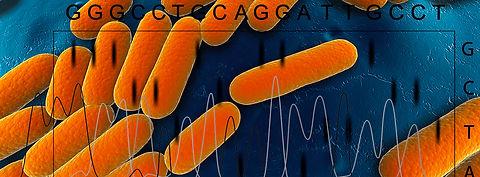 Bakteriersequence.jpg