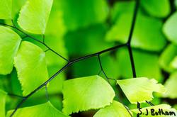 little-leaves-web.jpg