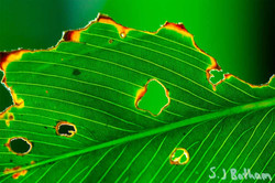 crop-leaf-and-light-web.jpg