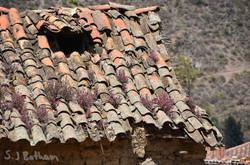 Ollytan roof.jpg
