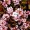 "Thumbnail: OX Ghost - 1.25"" Enamel Pin"