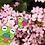 """Thumbnail: Strawberry Kermie Enamel Pin 1.25"""""""