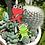 Thumbnail: Feral Kermie & Elmo Enamel Pin Set