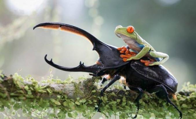 Histoires à méditer: Doutes et scarabée