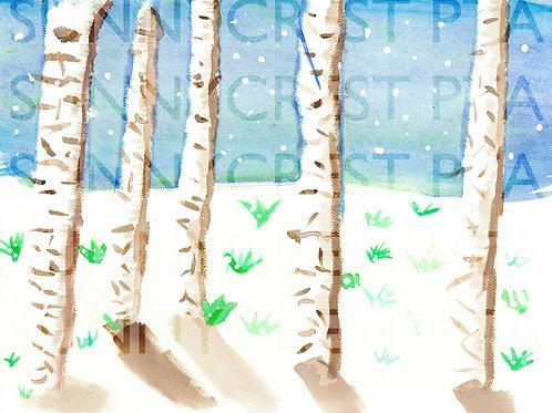 Mr. Brandt's Class - Briauna (Birch Trees)