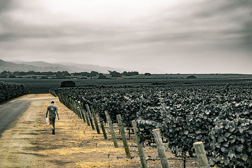 Days of Youth - Winemaker in the Vineyard