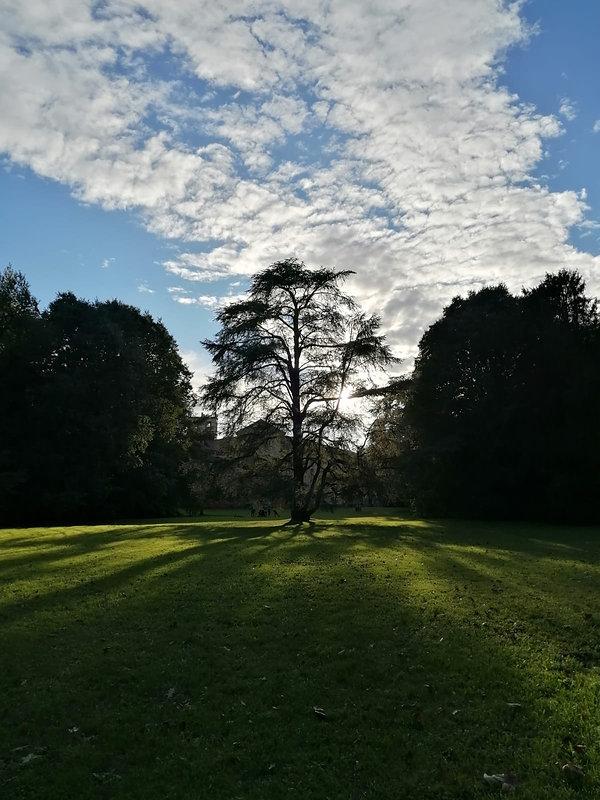 villa ghirlanda albero.jpeg