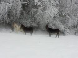 Eslene en kald vinterdag