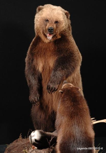 Bear Brown 7