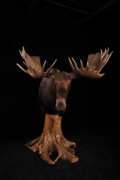 Moose Pedestal Mount