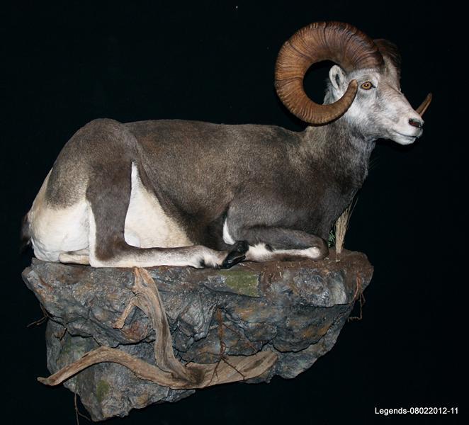 Sheep Stone LS 1