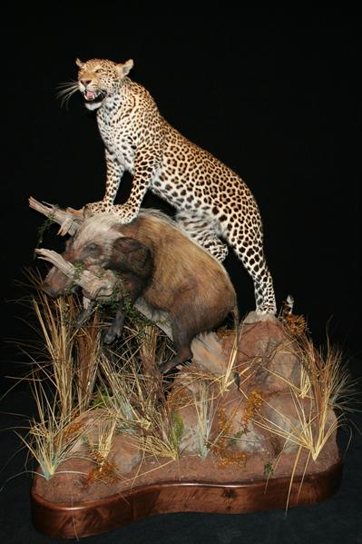 Leopard and Bush Pig