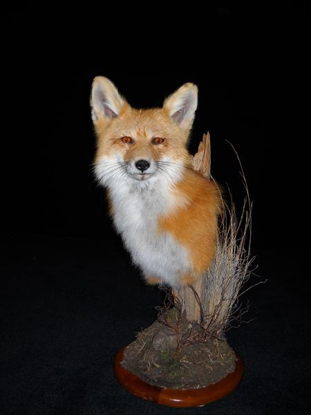 Fox Red Pedestal Mount