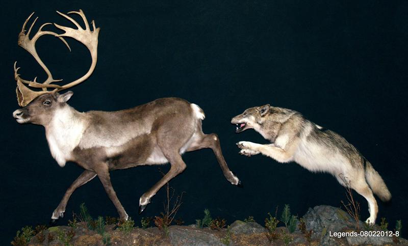 Caribou Wolf LS 1