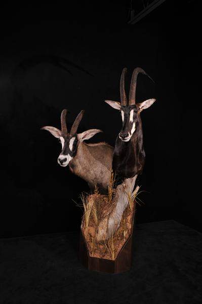 Sable and Roan Pedestal Mount