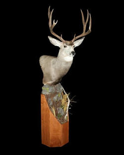 Deer Whitetail Pedestal on Cherry Base
