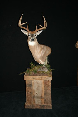 Deer Whitetail on Barnwood Pedestal Base 2