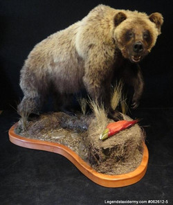 Bear Grizzly Lifesize 5