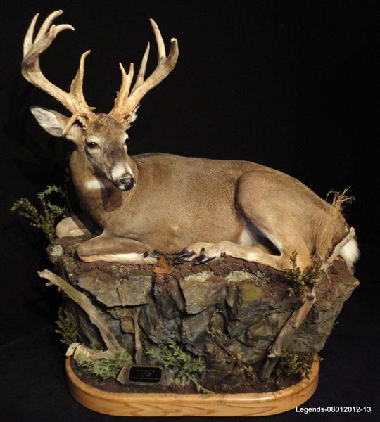 Deer Whitetail LS