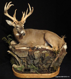 Deer Whitetail LS