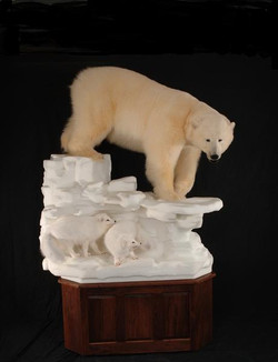 Bear Polar with Artic Fox